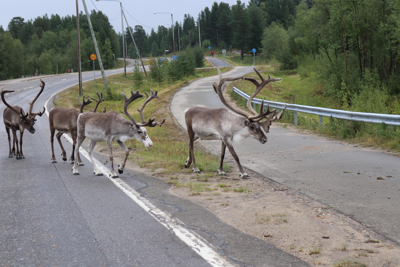 Nordlappland